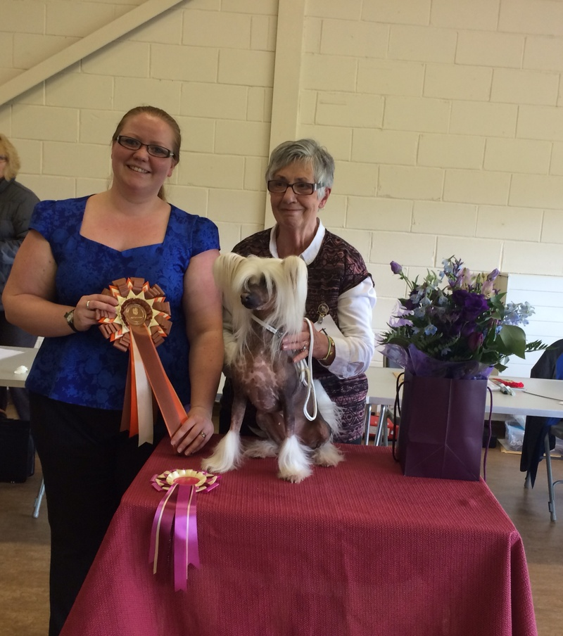Chinese Crested Dog Club Open Show